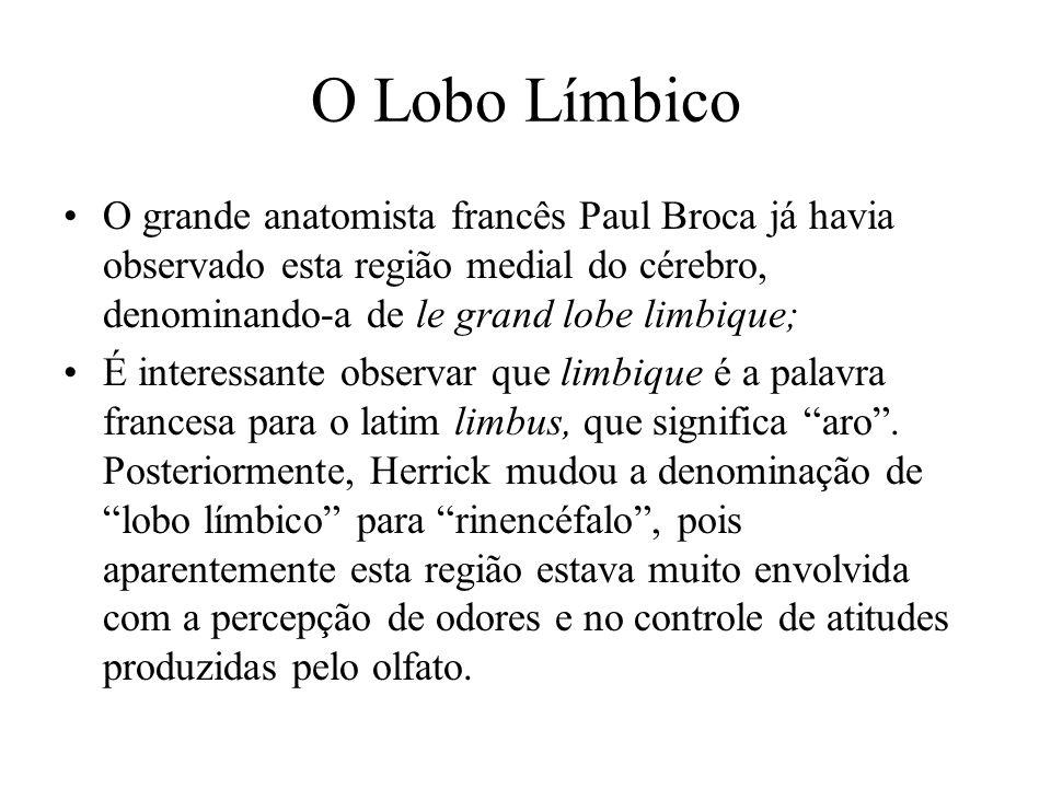 O Lobo Límbico O grande anatomista francês Paul Broca já havia observado esta região medial do cérebro, denominando-a de le grand lobe limbique;