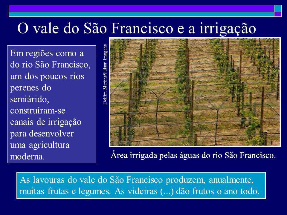 O vale do São Francisco e a irrigação