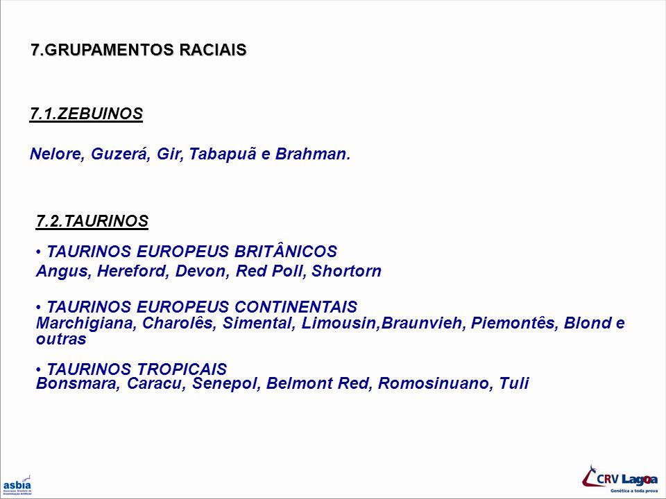 7.GRUPAMENTOS RACIAIS 7.1.ZEBUINOS. Nelore, Guzerá, Gir, Tabapuã e Brahman. 7.2.TAURINOS.