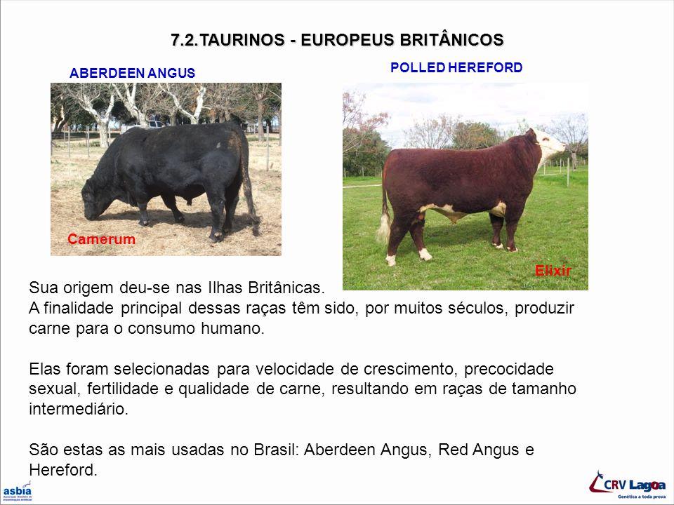 7.2.TAURINOS - EUROPEUS BRITÂNICOS