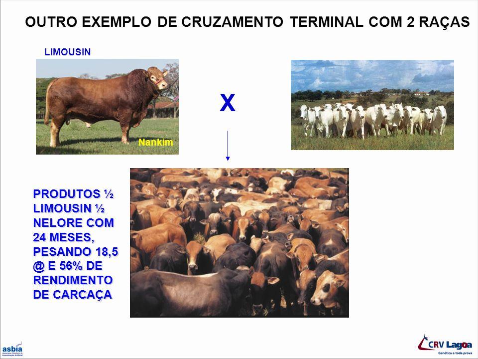 OUTRO EXEMPLO DE CRUZAMENTO TERMINAL COM 2 RAÇAS