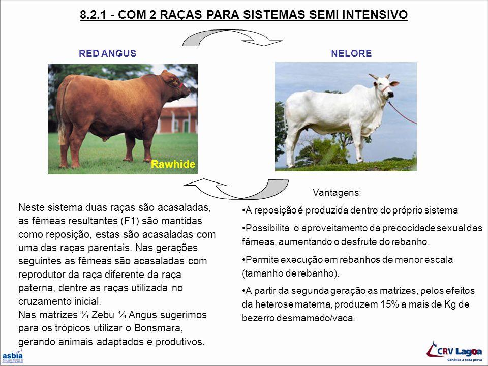 8.2.1 - COM 2 RAÇAS PARA SISTEMAS SEMI INTENSIVO