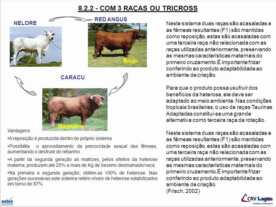 8.2.2 - COM 3 RAÇAS OU TRICROSS RED ANGUS NELORE