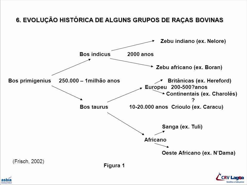 6. EVOLUÇÃO HISTÓRICA DE ALGUNS GRUPOS DE RAÇAS BOVINAS