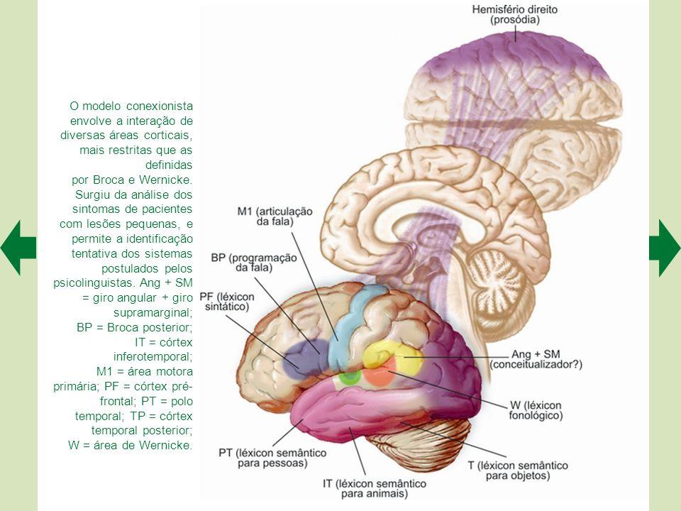 O modelo conexionista envolve a interação de diversas áreas corticais, mais restritas que as definidas