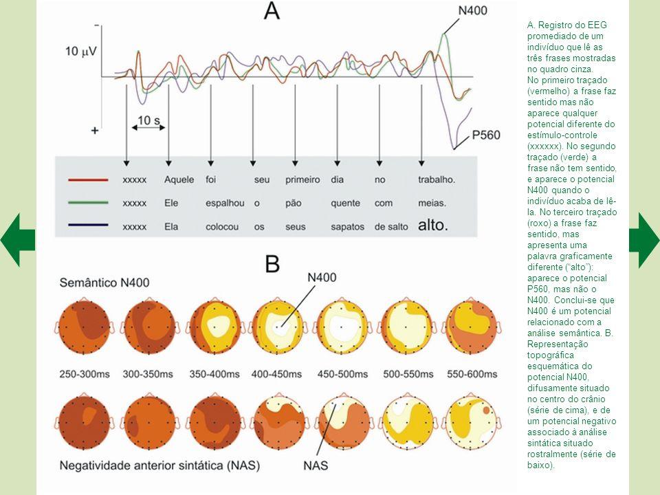 A. Registro do EEG promediado de um indivíduo que lê as três frases mostradas no quadro cinza.
