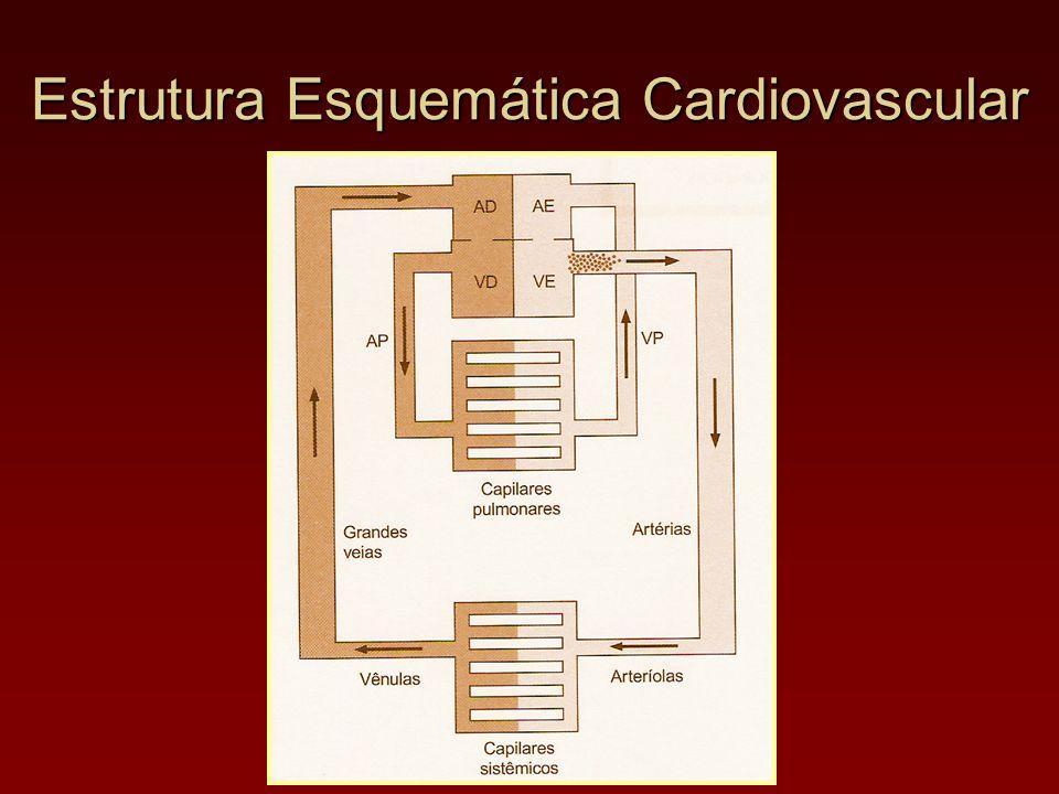 Estrutura Esquemática Cardiovascular