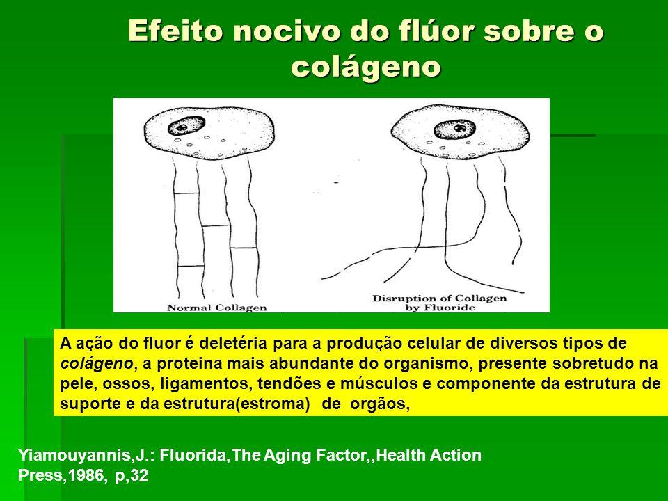 Efeito nocivo do flúor sobre o colágeno