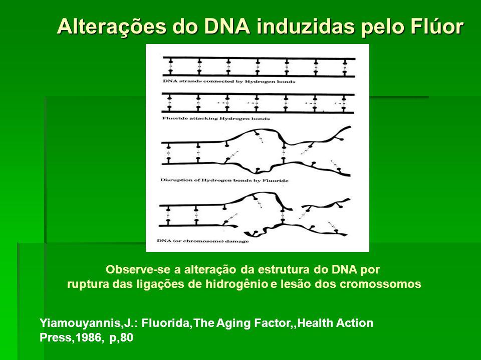 Alterações do DNA induzidas pelo Flúor