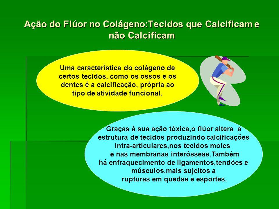 Ação do Flúor no Colágeno:Tecidos que Calcificam e não Calcificam