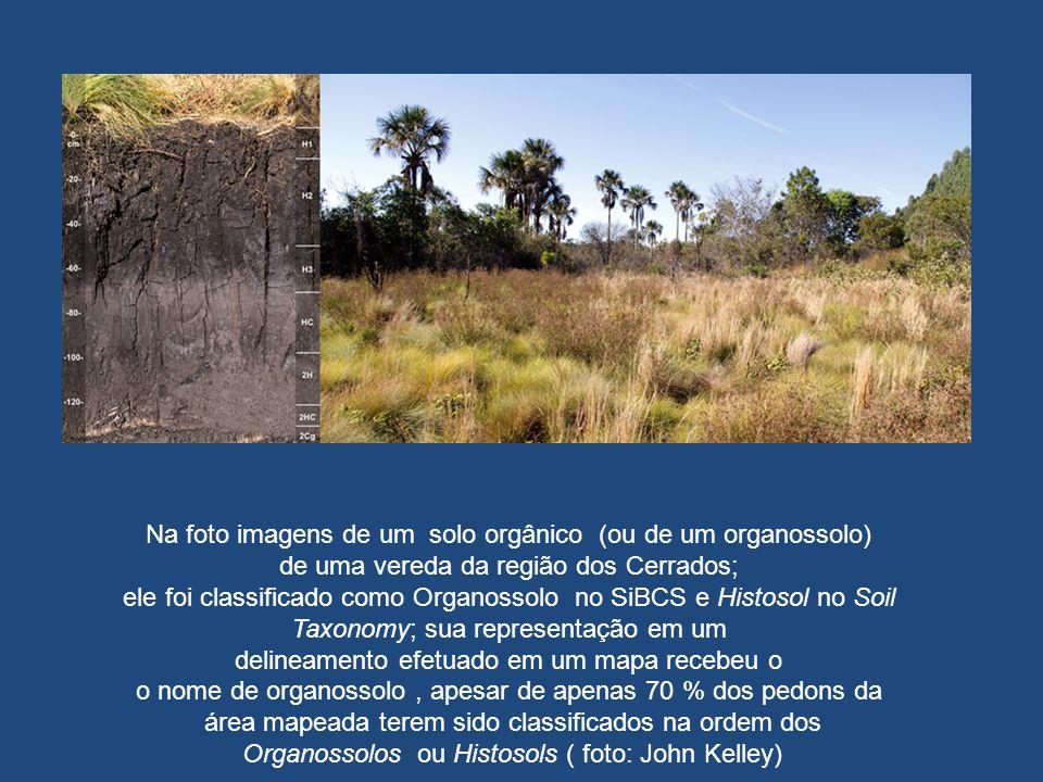 Na foto imagens de um solo orgânico (ou de um organossolo)