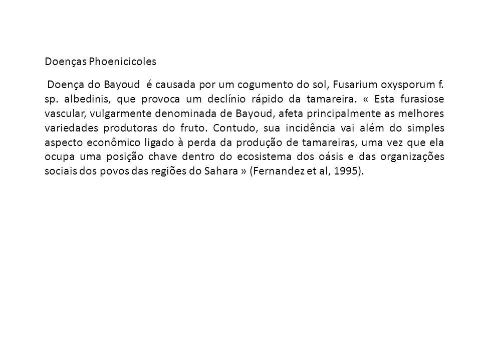 Doenças Phoenicicoles