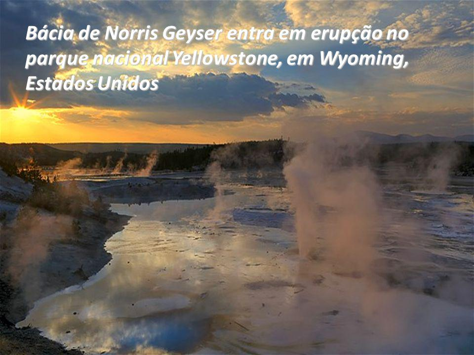 Bácia de Norris Geyser entra em erupção no parque nacional Yellowstone, em Wyoming, Estados Unidos