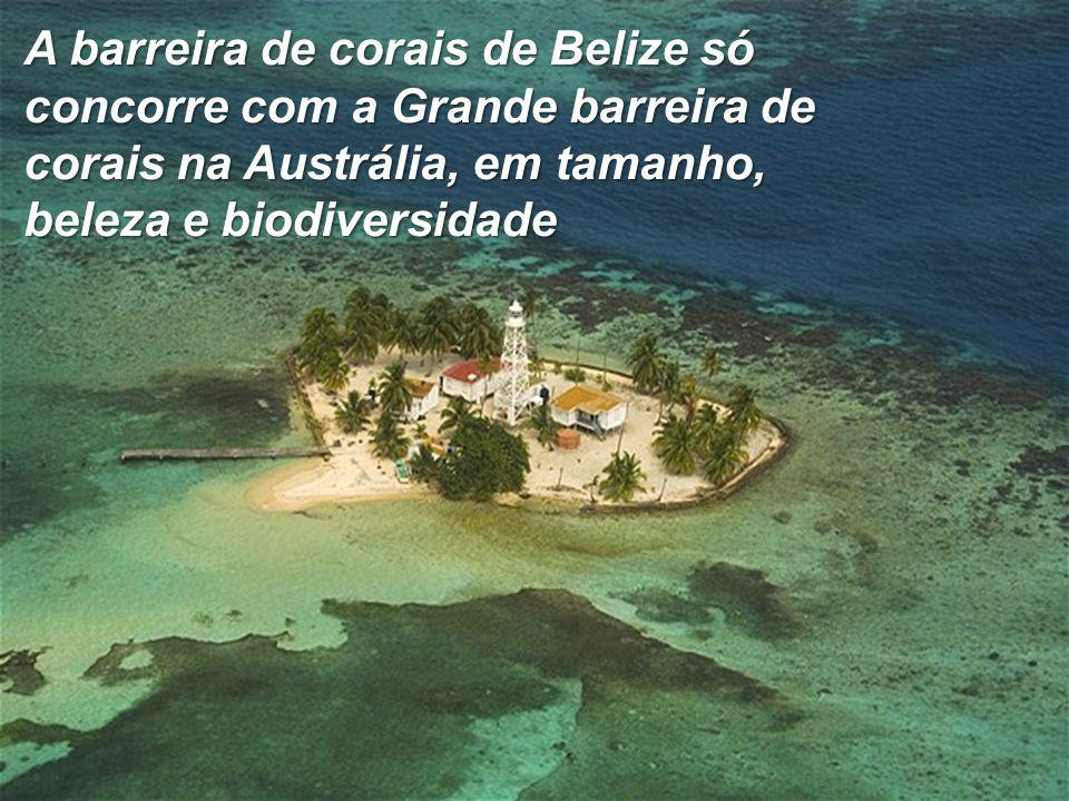 A barreira de corais de Belize só concorre com a Grande barreira de corais na Austrália, em tamanho, beleza e biodiversidade