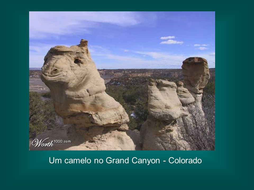 Um camelo no Grand Canyon - Colorado