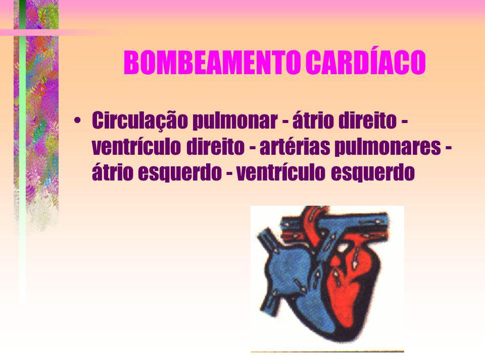 BOMBEAMENTO CARDÍACO Circulação pulmonar - átrio direito - ventrículo direito - artérias pulmonares - átrio esquerdo - ventrículo esquerdo.