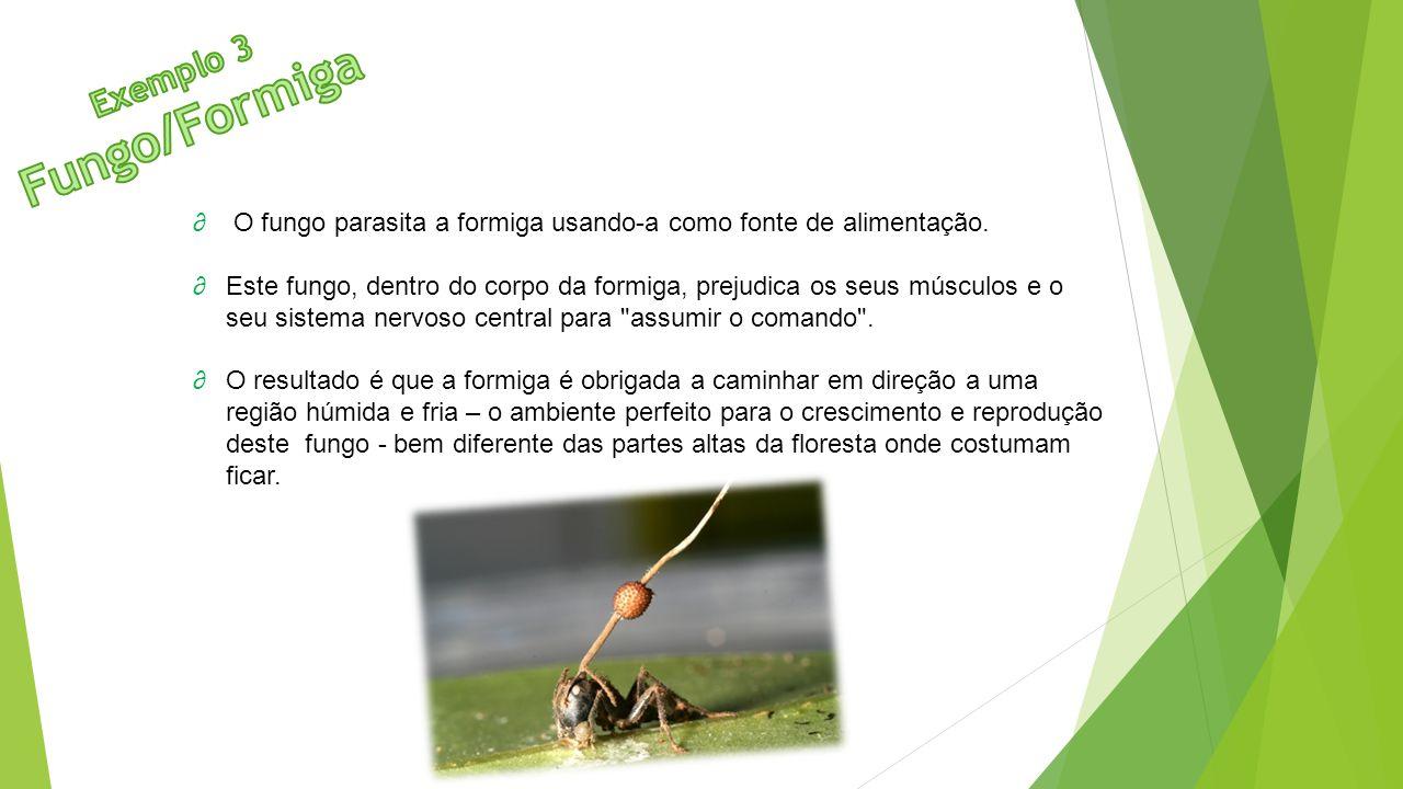 Fungo/Formiga Exemplo 3