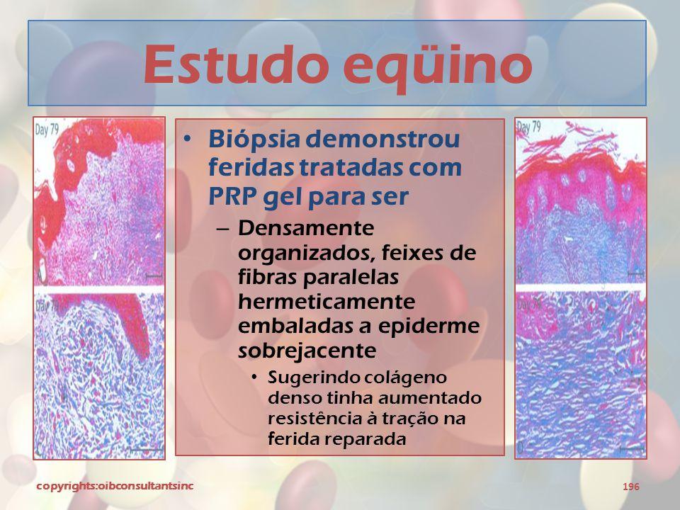Estudo eqüino Biópsia demonstrou feridas tratadas com PRP gel para ser