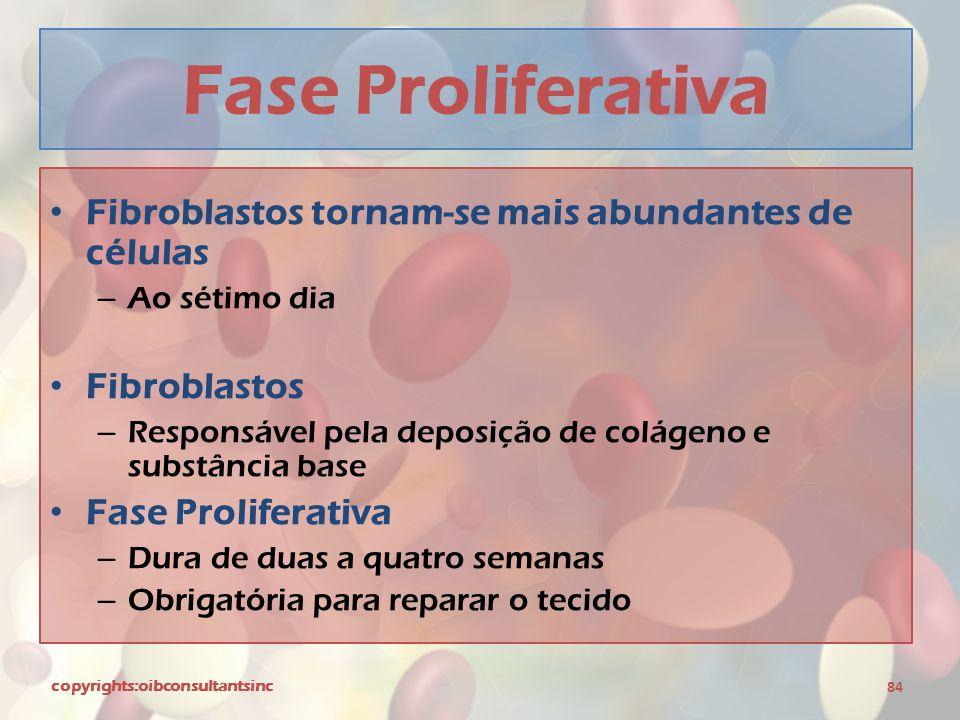 Fase Proliferativa Fibroblastos tornam-se mais abundantes de células