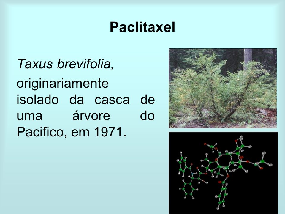 Paclitaxel Taxus brevifolia,