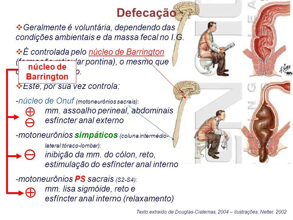 Defecação Geralmente é voluntária, dependendo das condições ambientais e da massa fecal no I.G.