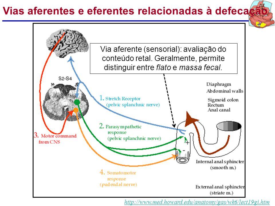Vias aferentes e eferentes relacionadas à defecação