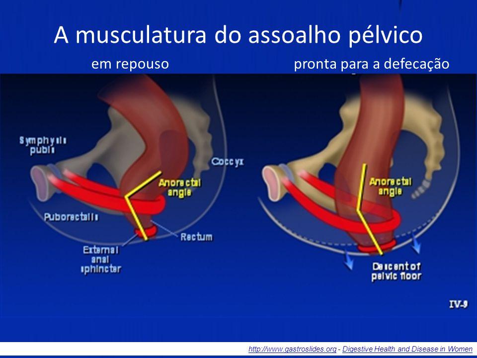 A musculatura do assoalho pélvico