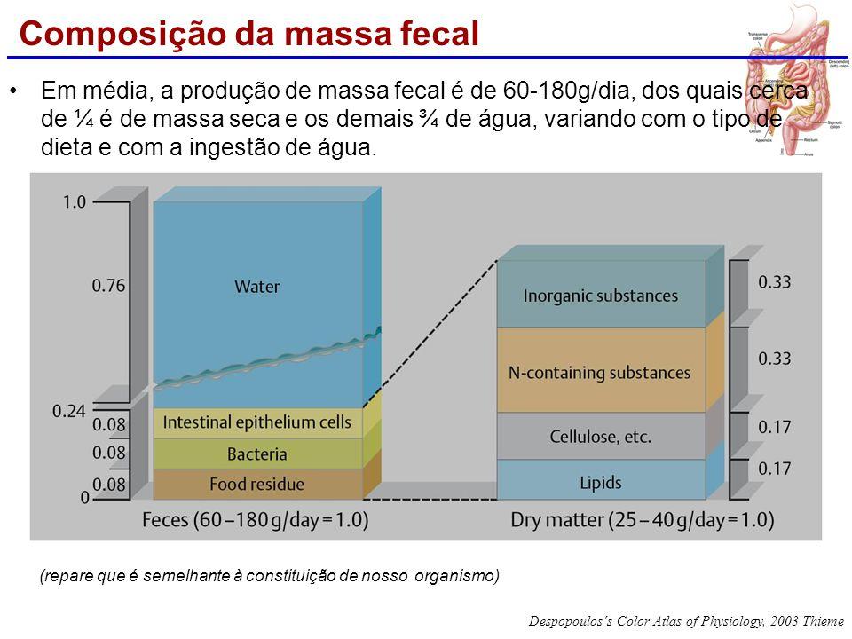 Composição da massa fecal