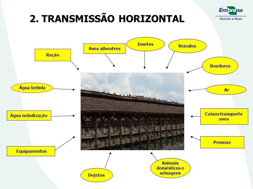 2. TRANSMISSÃO HORIZONTAL