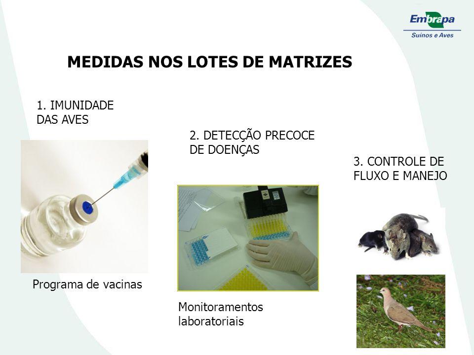 MEDIDAS NOS LOTES DE MATRIZES