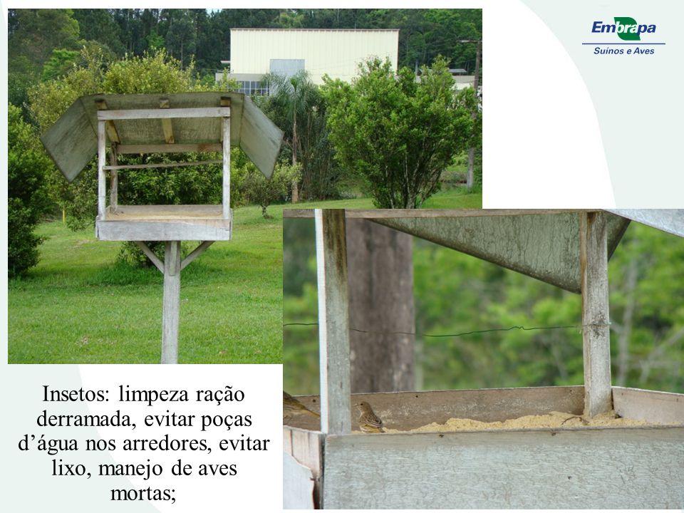 Insetos: limpeza ração derramada, evitar poças d'água nos arredores, evitar lixo, manejo de aves mortas;