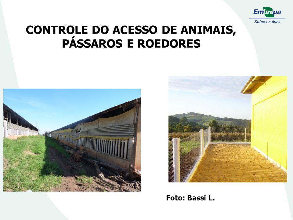 CONTROLE DO ACESSO DE ANIMAIS, PÁSSAROS E ROEDORES