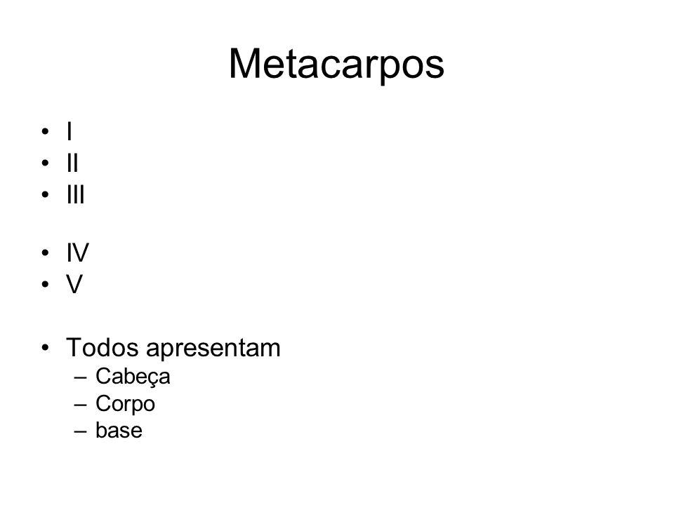 Metacarpos I II III IV V Todos apresentam Cabeça Corpo base