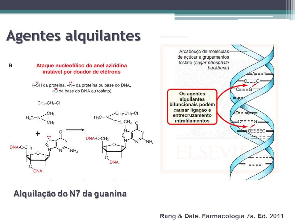 Agentes alquilantes Alquilação do N7 da guanina