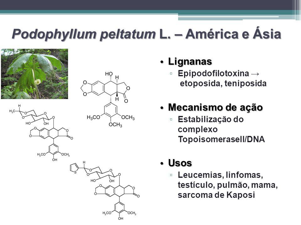 Podophyllum peltatum L. – América e Ásia