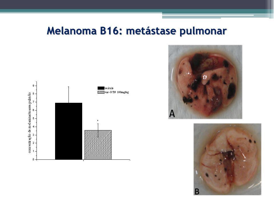 Melanoma B16: metástase pulmonar