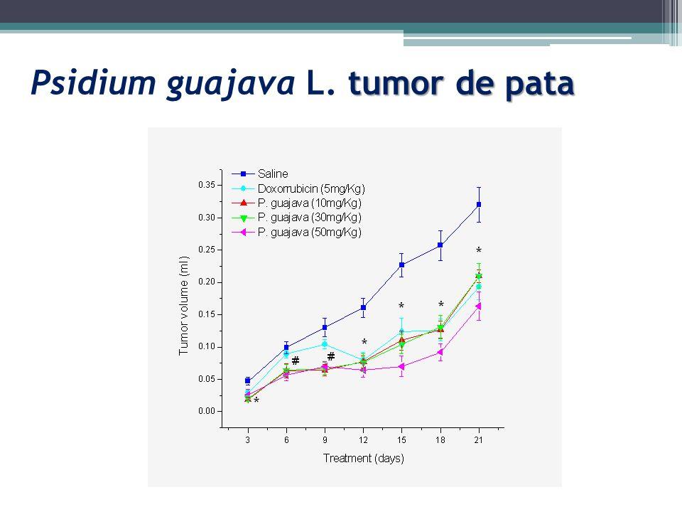 Psidium guajava L. tumor de pata