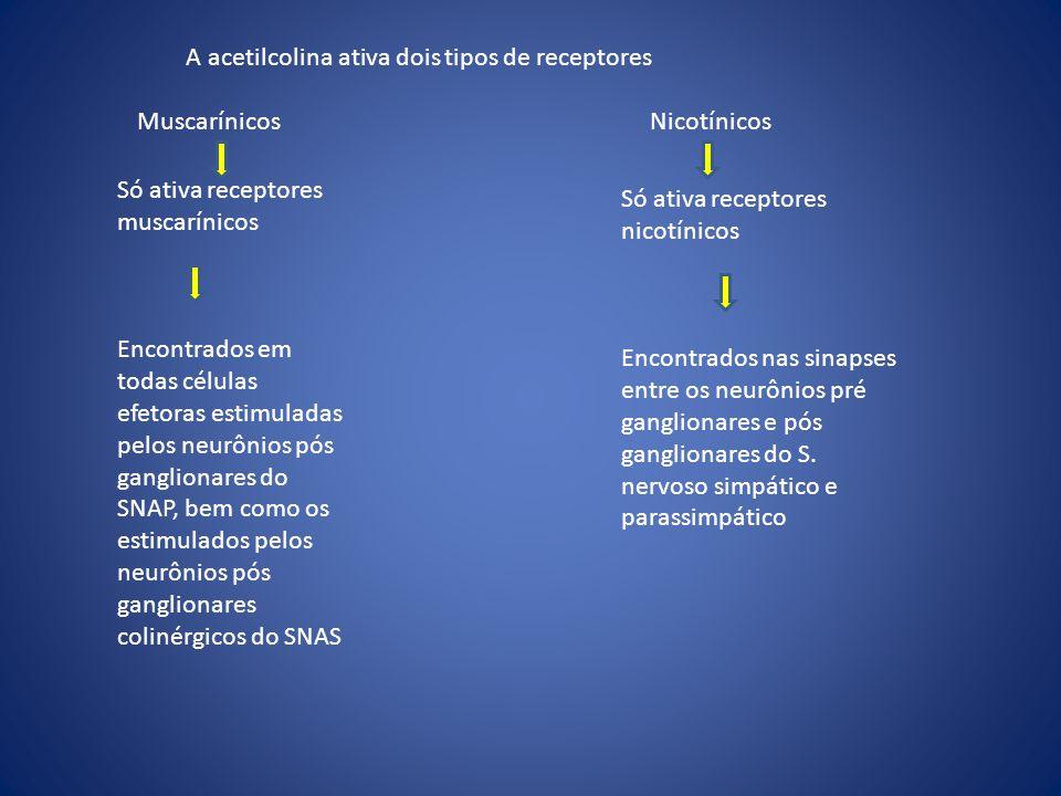 A acetilcolina ativa dois tipos de receptores