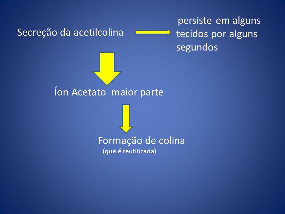 Secreção da acetilcolina