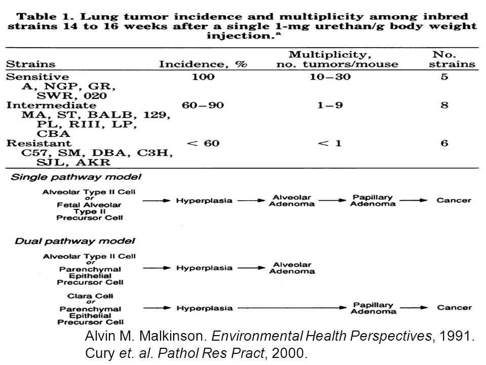 Alvin M. Malkinson. Environmental Health Perspectives, 1991.