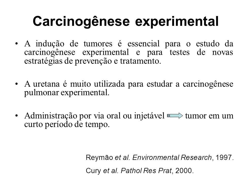 Carcinogênese experimental