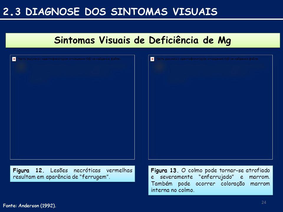 Sintomas Visuais de Deficiência de Mg