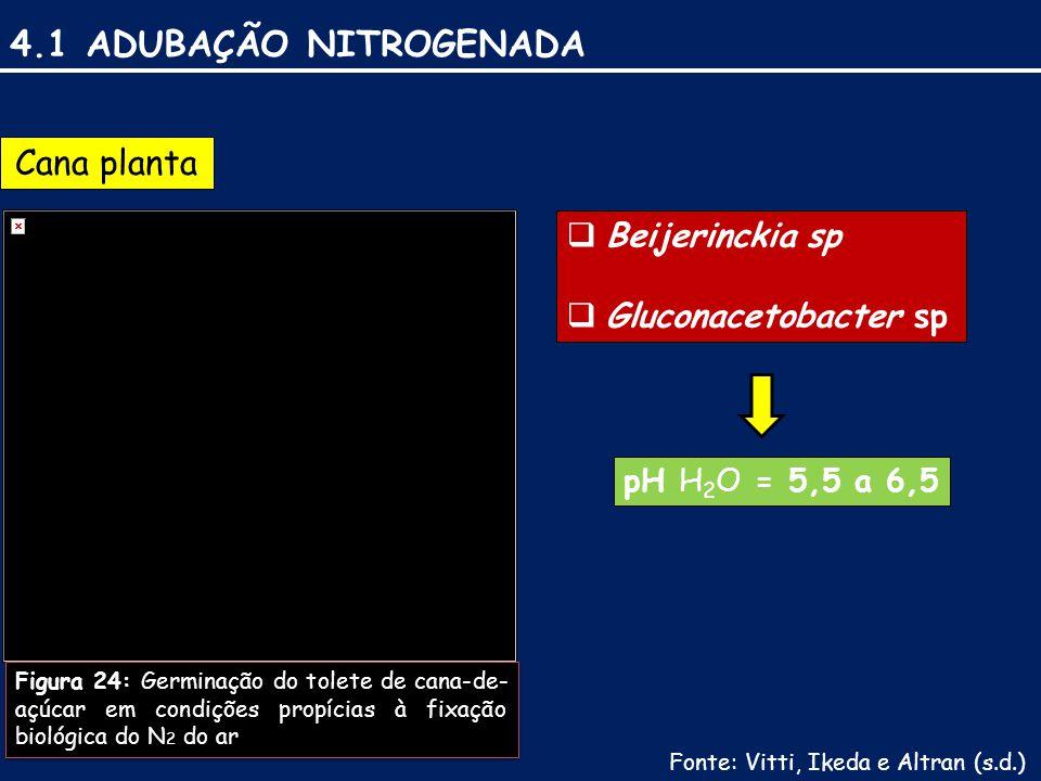 4.1 ADUBAÇÃO NITROGENADA Cana planta Beijerinckia sp