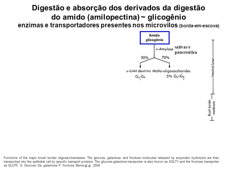Digestão e absorção dos derivados da digestão