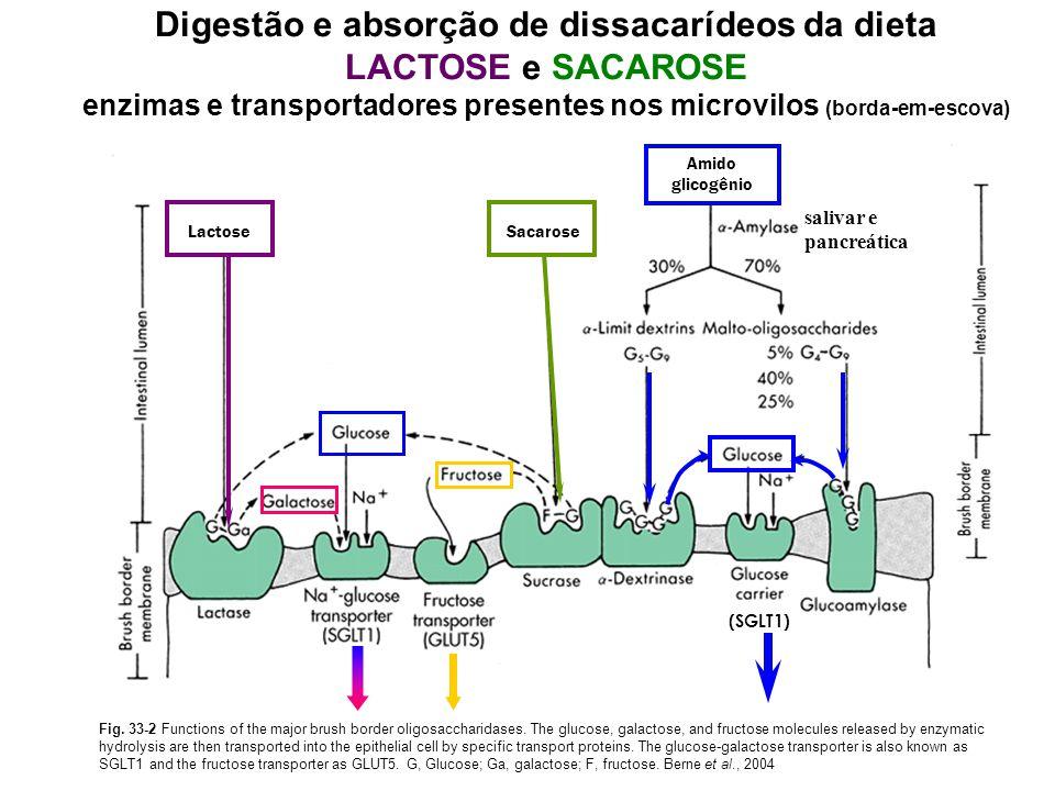 Digestão e absorção de dissacarídeos da dieta LACTOSE e SACAROSE
