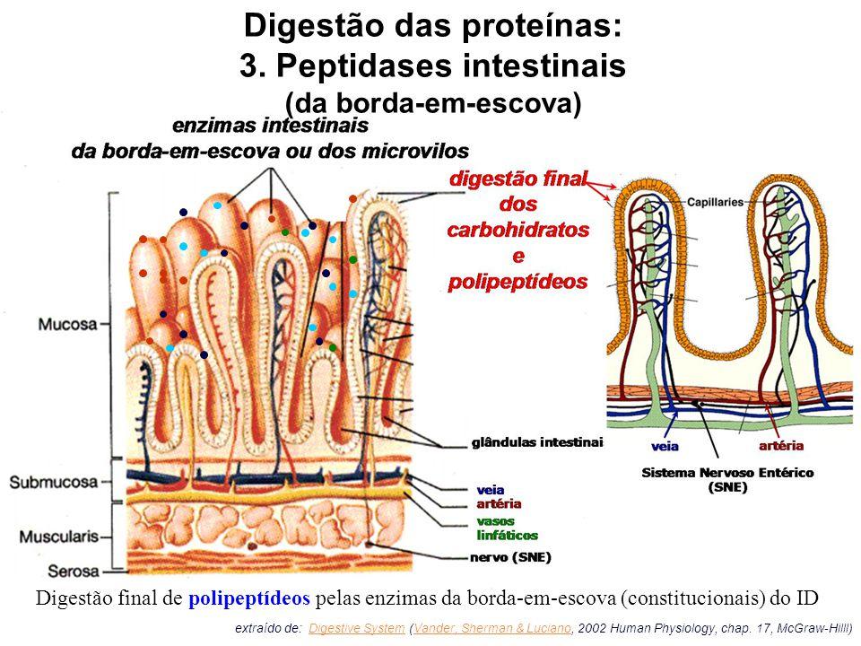 Digestão das proteínas: 3. Peptidases intestinais