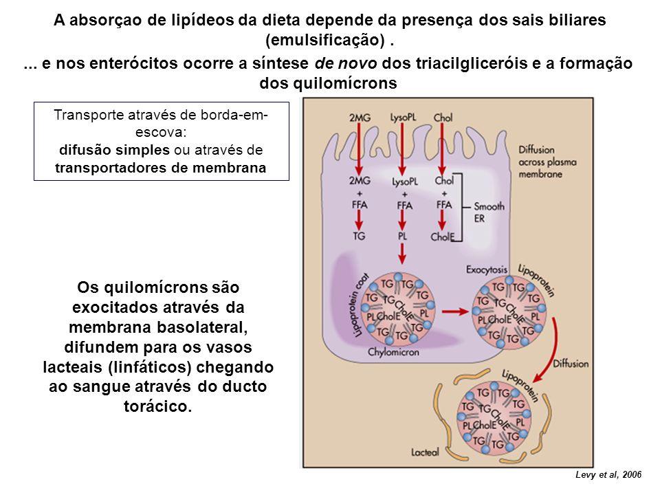transportadores de membrana