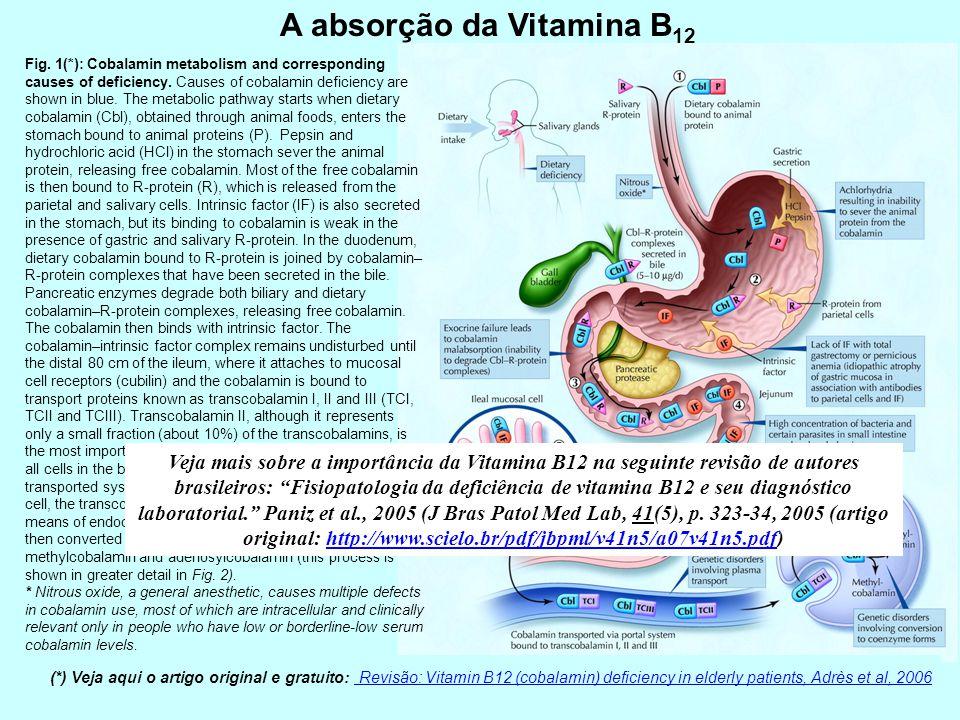 A absorção da Vitamina B12