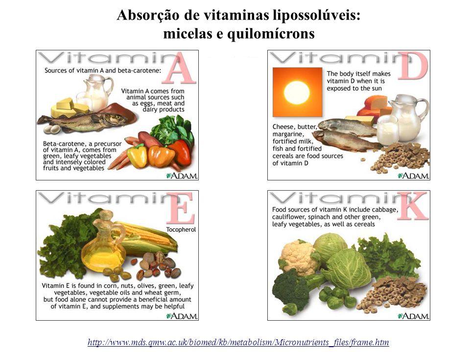 Absorção de vitaminas lipossolúveis: micelas e quilomícrons
