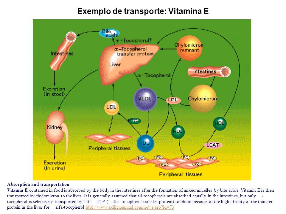 Exemplo de transporte: Vitamina E